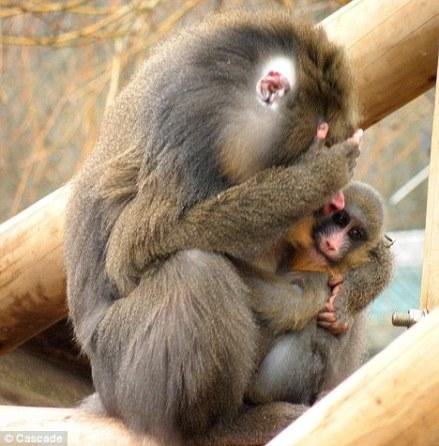 Monkey stepmum